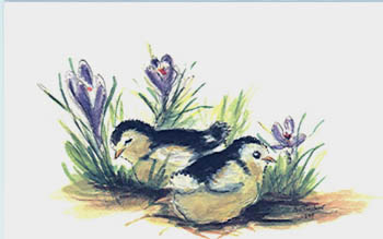 TWO CHICKS IN CROCUS.