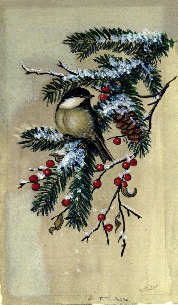 CHICKADEE ON EVERGREEN BRANCH. Color print 12/100. Tasha Tudor.