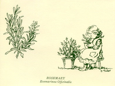NEUHSA HERB GARDEN and ROSEMARY DOUBLE-FOLD NOTE CARDS [12]