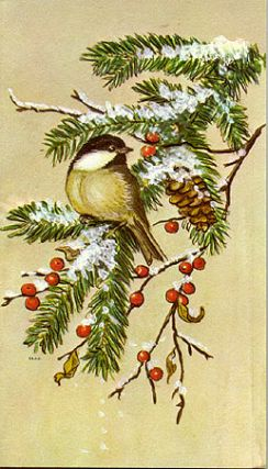 CHICKADEE ON EVERGREEN BRANCH