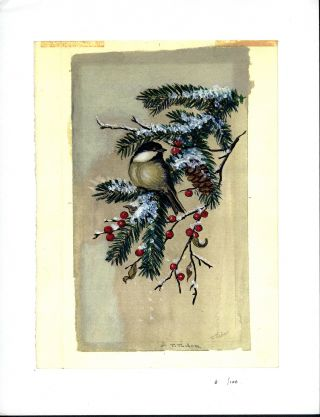 CHICKADEE ON EVERGREEN BRANCH. Color print 12/100