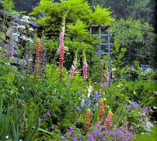 ENGLISH COTTAGE GARDENING FOR AMERICAN GARDENERS