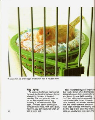 CANARIES; A Complete Pet Owner's Manual [cover title]