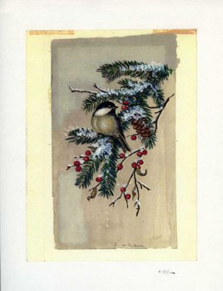 CHICKADEE ON EVERGREEN BRANCH. Color print 15/100. Tasha Tudor.