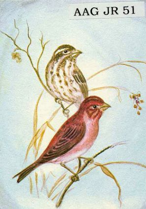 "CHRISTMAS CARD ""PURPLE FINCHES"" Tasha Tudor"
